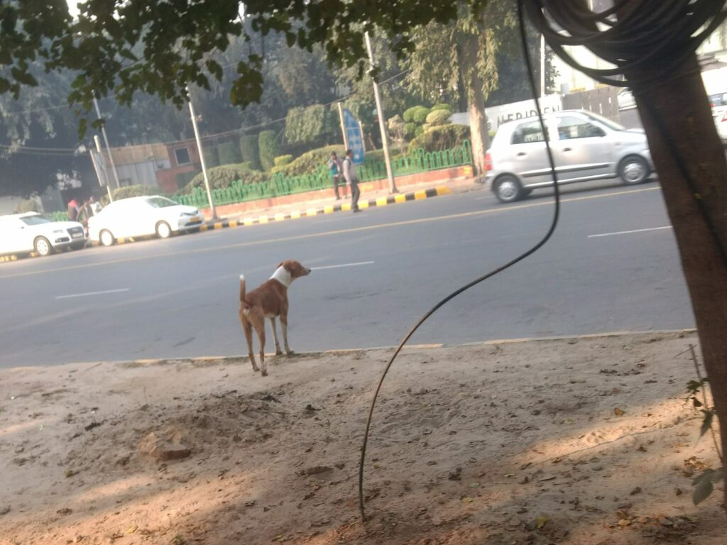 Stray dog in front of the road.