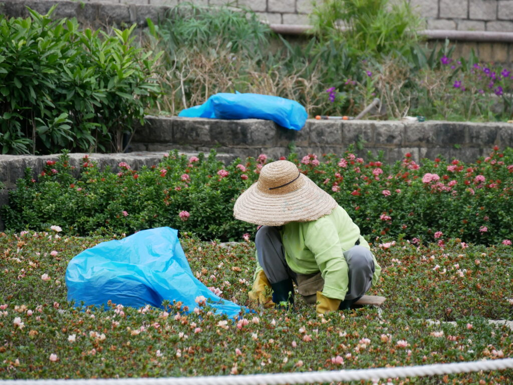 A park employee is cleaning a garden. There is some flowers in the background.