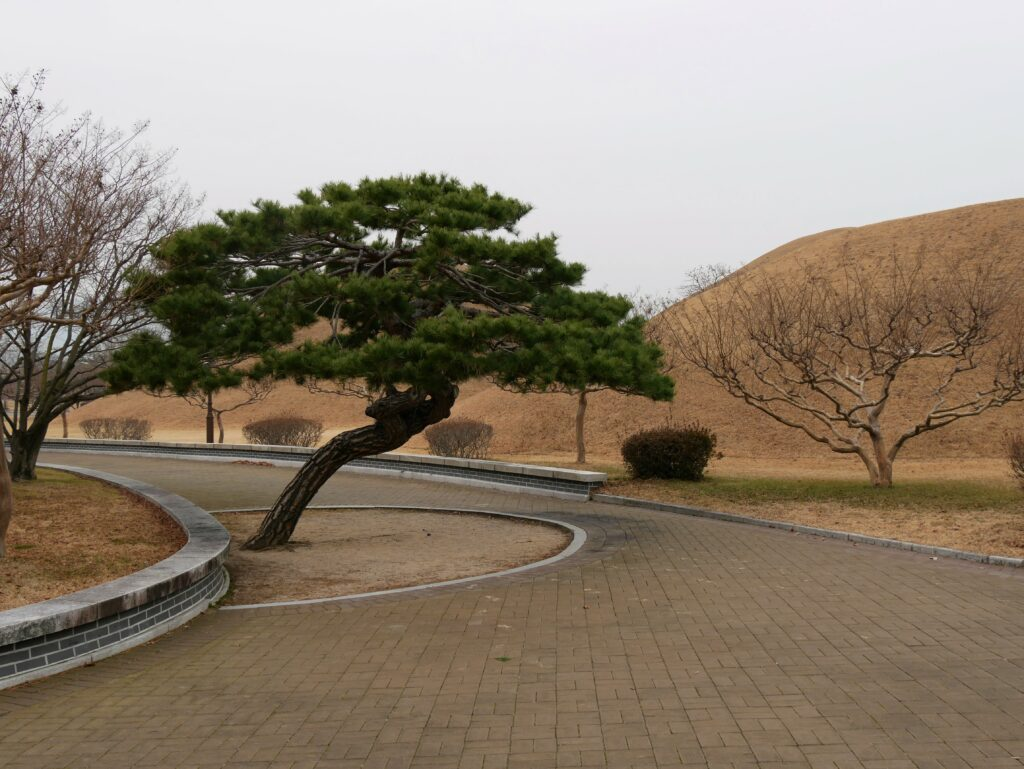 A green pine. Tumulus can be seen in the background. There is a stone path.